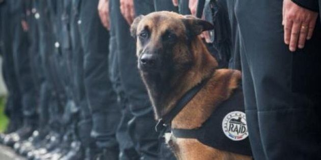 Cane 'testa di cuoio' ucciso nel raid. L'addio della polizia francesce al cane d'assalto Diesel