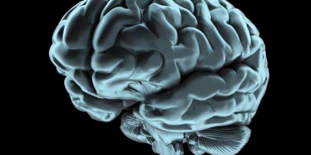 Scongelato per la prima volta con successo il cervello di un mammifero. Si riapre il sogno