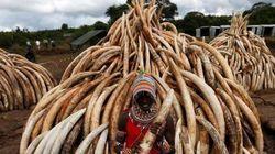 Il Kenya brucia 105 tonnellate d'avorio contro il