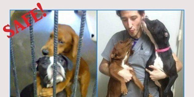 Kala e Keira, due cani uniti e l'immagine del loro ultimo straziante abbraccio: