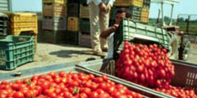 Digiuniamo dai pomodori. Non mangiamone per un giorno, in memoria di