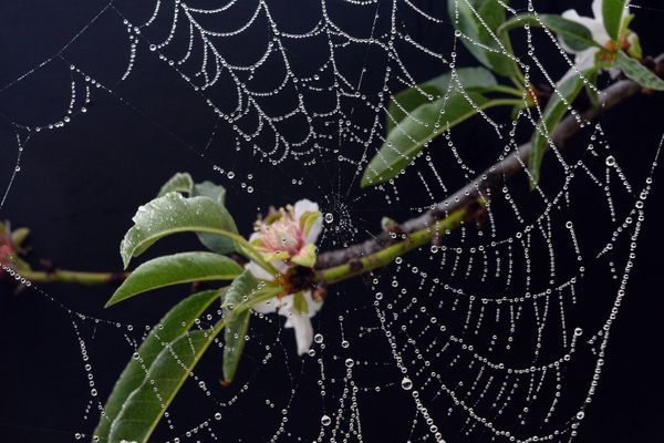 """Oh Christmas tree, Oh Christmas tree, Such spiders do you bring me!   Christmas trees in Ukraine are traditionally <a href=""""h"""