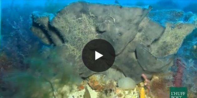 Una discarica sottomarina nel Canale di