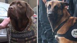Nel ricordo di Diesel: in arrivo i nuovi giubbotti antiproiettile per i cani