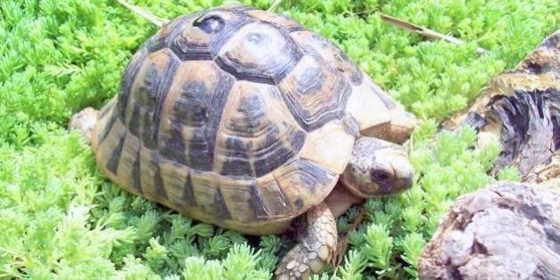 Salva le tartarughe e crea un'oasi per tutelarle:
