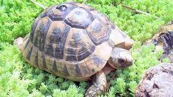 Salva le tartarughe e crea un'oasi tutta per
