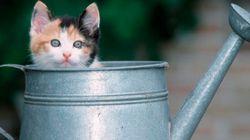 25 modi in cui il tuo gatto ti dimostra il proprio