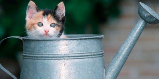 25 modi in cui il tuo gatto ti dimostra il proprio affetto