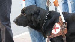 Va con il cane guida dalla Polizia per una denuncia. Ma non la fanno