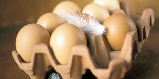 McDonald's, basta con le galline in gabbia, d'ora in poi solo uova da allevamenti liberi. Il re del burger...