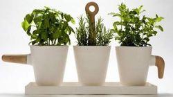 I 'cuccioli' delle piante, micronutrienti da coltivare in