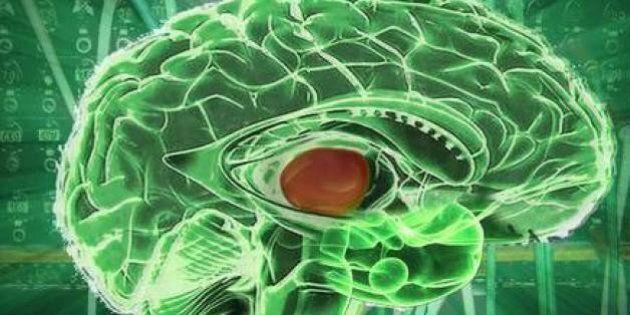 Il segreto del multitasking si trova in una struttura del cervello: la scoperta pubblicata su