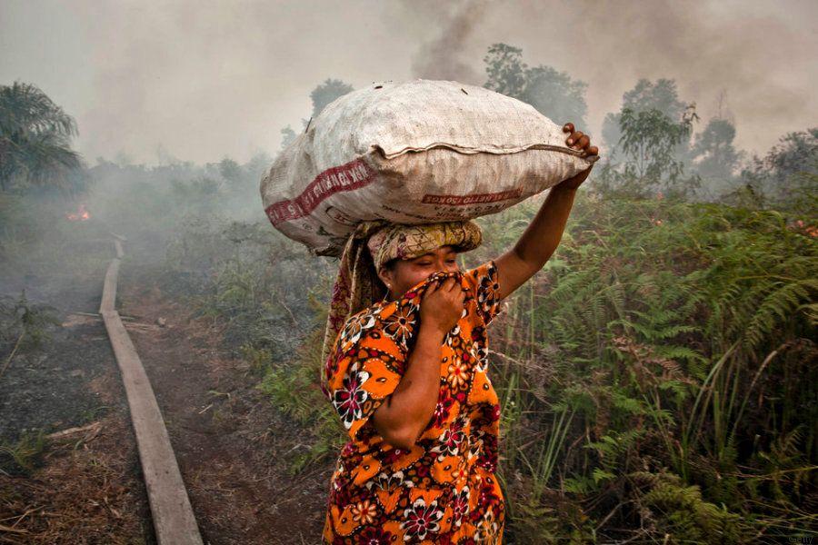 L'olio di palma è ovunque. E sta distruggendo le foreste del Sud-est asiatico