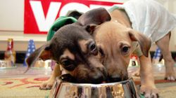 Crocchette vegetariane per cani e gatti. Ma c'è chi storce il