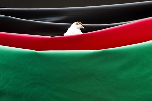 A pigeon sits on the tri-colour Afghan flag during the campaign rally of presidential candidate Abdullah Abdullah at a stadiu