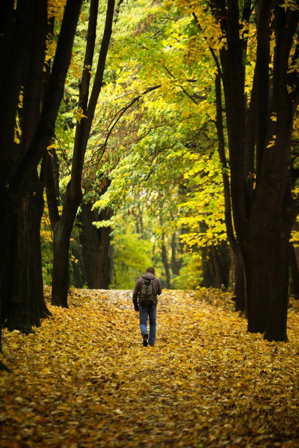 A man walks through Valea Morilor park in central Chisinau, Moldova, Tuesday, Oct. 27, 2009.(John McConnico/AP)