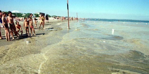 Alga tossica in Puglia, provoca febbre e faringiti. Da Bari si sta spostando verso il