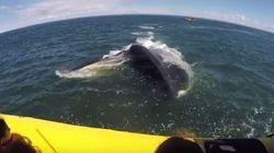 Questa enorme balena ha fatto prendere un bello spavento ai