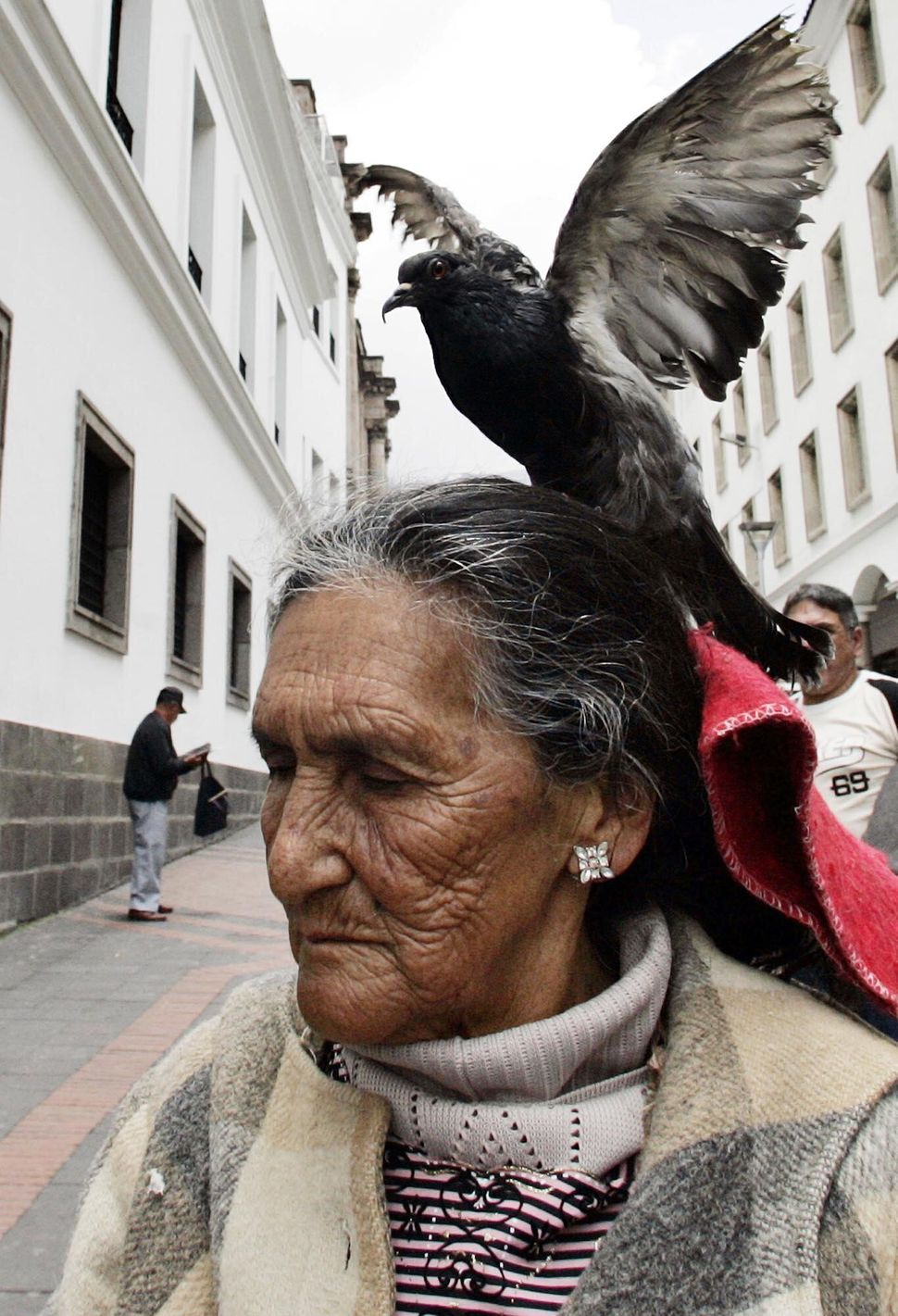 A woman carries her pet pigeon named Isabel, on her head as she walks in downtown Quito, Thursday, March 27, 2008. (Dolores O
