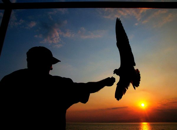 A man feeds a sea gull on a ferry between Keramoti, near Kavala city, and Thassos island, Greece, Aug. 20, 2009. (Petros Kara