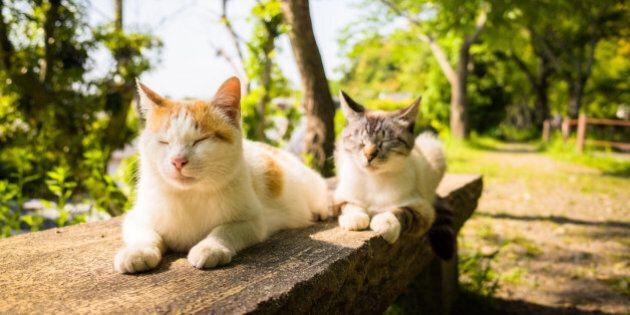L'aggressività del gatto potrebbe dipendere dal colore del suo