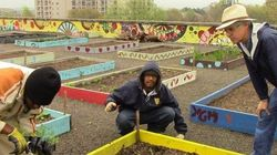La battaglia dei senzatetto: orto urbano che sfama 400 persone al