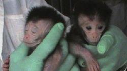 La Cina sperimenta macachi transgenici per combattere