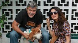 George e Amal Clooney adottano una cagnolina