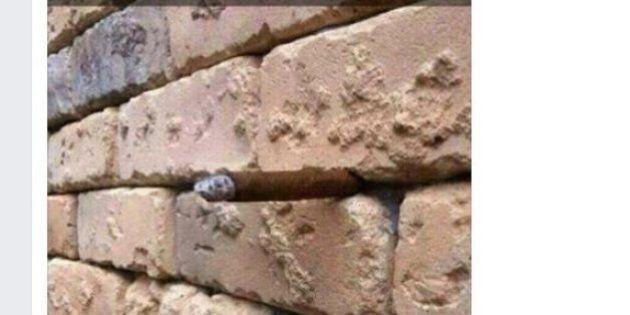 Cosa c'è tra i mattoni del muro? L'illusione ottica fa impazzire il web. HuffPost svela la soluzione...