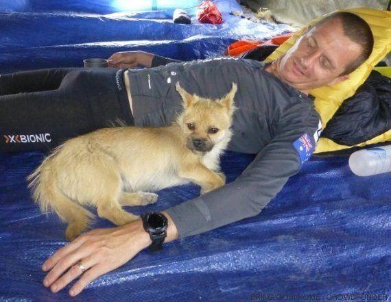 Una cagnolina randagia trova il suo umano dopo aver corso insieme per oltre centoventi