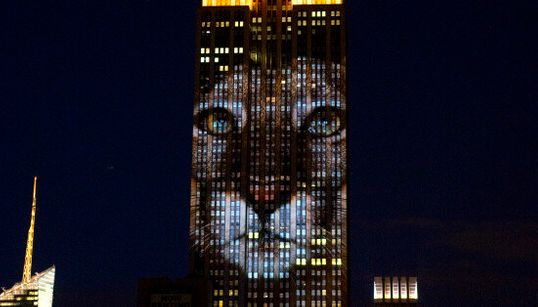 L'Empire State Building si illumina per Cecil