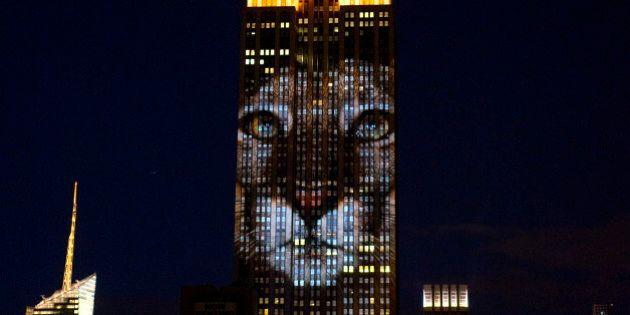 L'Empire State Building si illumina per Cecil. Sabato sera la proiezione delle specie a rischio estinzione