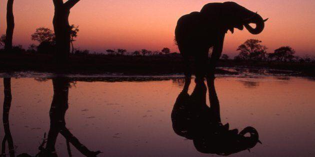 Viaggi, i Paesi da visitare nel 2016 secondo Lonely Planet. Dal Botswana alle isole Fiji, lasciatevi...