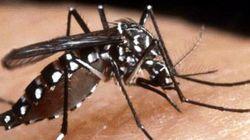 9 modi per difendersi dalla zanzara tigre approvati dal Ministero della