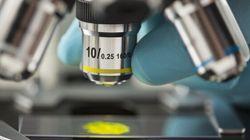 Microscopia a super-risoluzione. Ecco come si studiano oggi le