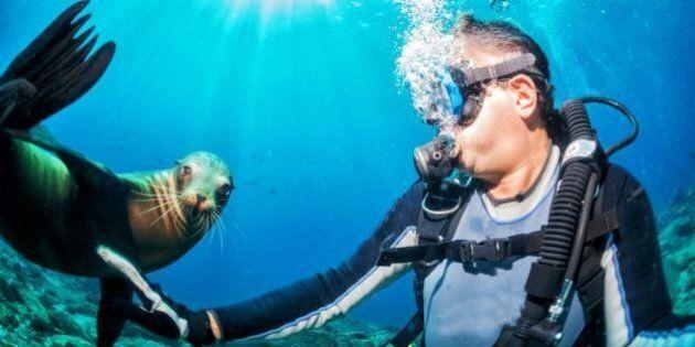 I 6 posti più belli del mondo in cui immergersi, secondo Tripadvisor. Nella classifica anche Cala Gonone,...