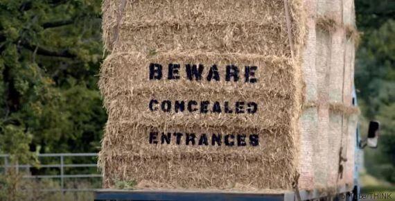 Ecco come pecore e mucche possono esserti utili mentre guidi, invece di distrarti