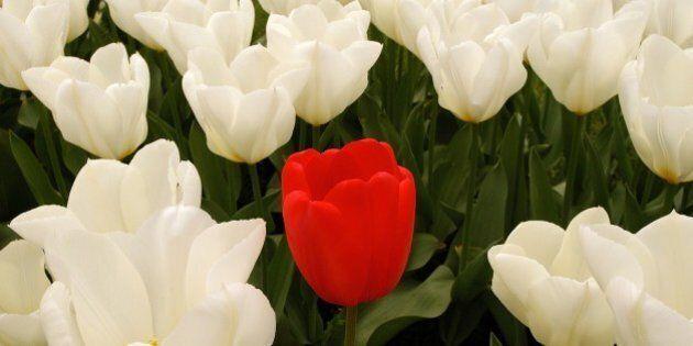 La tulipomania, la bolla finanziaria sui tulipani che ha fatto sbocciare il capitalismo. Tutto cominciò...