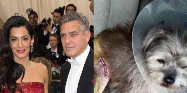 George Clooney e sua moglie Amal adottano un cagnolino sfortunato per regalarlo ai genitori