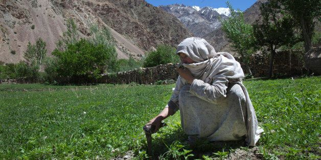 WAKHIL, AFGHANISTAN - MAY 15:  An Afghan woman works in a field of young marijuana plants on a family farm on May 15, 2011 in