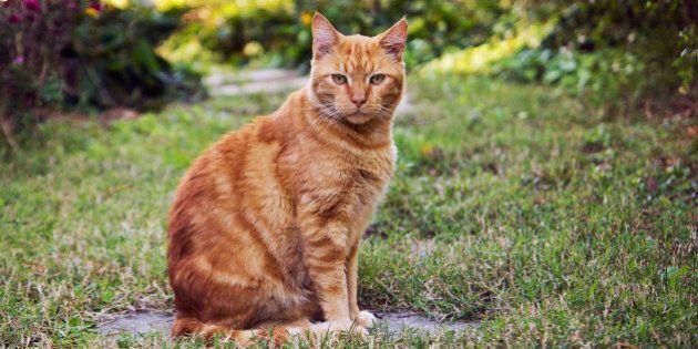 Mangio I Gatti Perché Amo Il Sapore Della Loro Carne Animalisti
