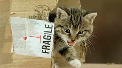 Ecco perché il vostro gatto preferisce la scatola di cartone alla cuccia che avete