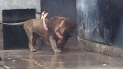 Tenta il suicidio gettandosi nella gabbia dei leoni, e le guardie sparano e uccidono i due