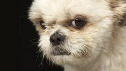 Il tuo cane sa quando sei arrabbiato con lui (e non si fida affatto di te in quei