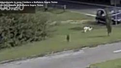 Abbandonano cane in un parcheggio. Il comune pubblica video su Facebook: