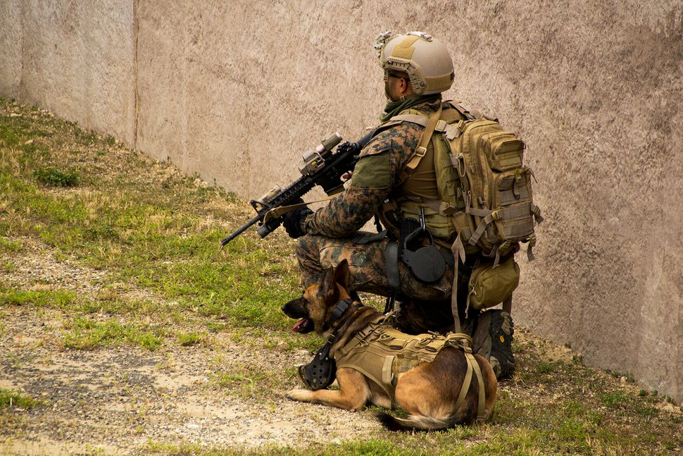 A U.S. Marine and his dog provide security during a special operations forces (SOF) integration at Marine Corps Training Area