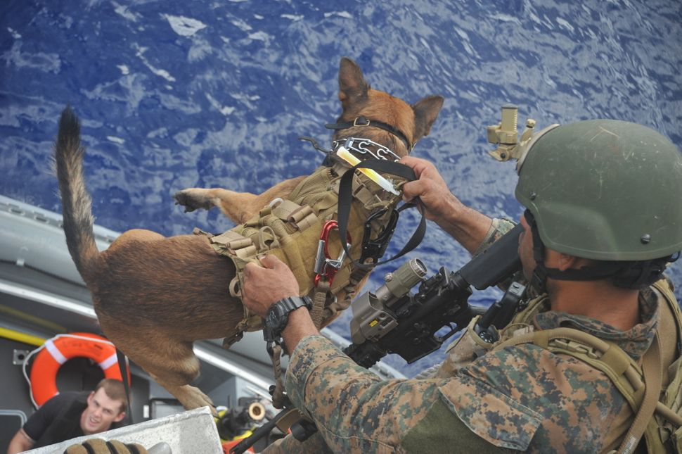 A U.S. Marine Special Operations team member lowers an elite canine into a rigid-hulled inflatable boat set to depart the lit