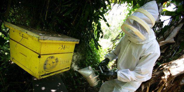 KISUMU, KENYA - SEPTEMBER 10: Images of a subsidised bee-keeper at work in the Sauri Millenium village, September 10, 2007 in