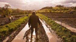 Una lezione di umiltà all'animalista da un contadino