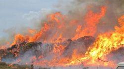 Ma chi se ne frega se un bosco brucia dall'altra parte del